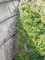 Barajul Tarnita - panoramio.jpg