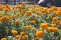 Batumi Botanical Garden (2).jpg