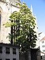Baum wächst von der Kathedrale - panoramio.jpg