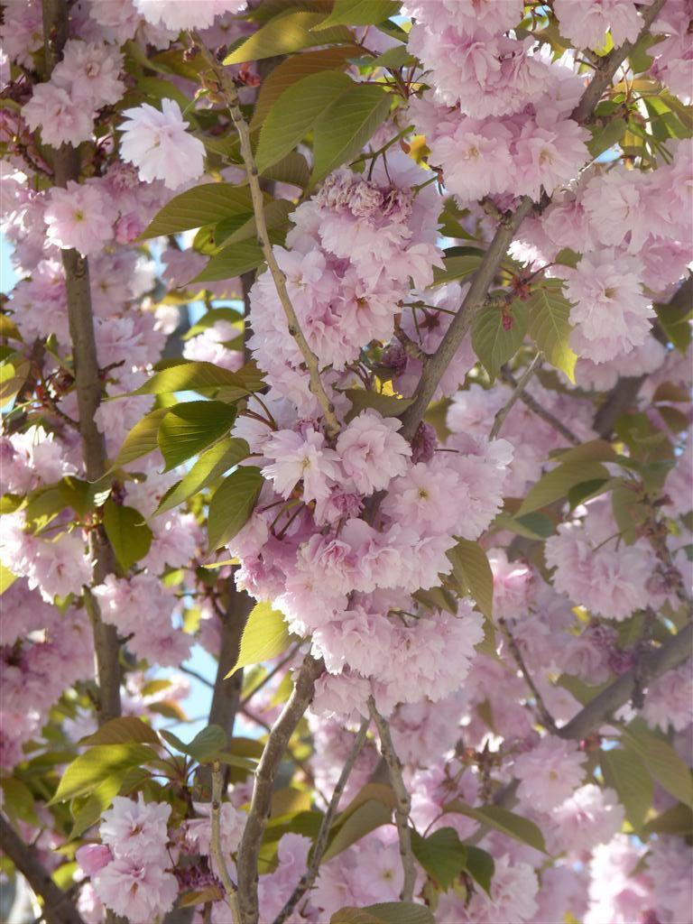 Filebeautiful Blooming Flower In Garden Of Sultan Ahmed Mosqueg