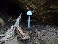 Bioluminescent fungus.jpg