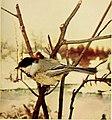 Bird neighbors (1903) (20357466846).jpg