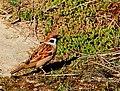 Birds Prešov16Slovakia2.JPG