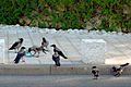 Birds in Haifa.jpg