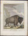 Bison americanus - 1700-1880 - Print - Iconographia Zoologica - Special Collections University of Amsterdam - UBA01 IZ21200233.tif