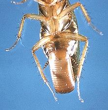 Как избавится от тараканов?