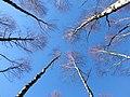 Blau DSCI0172.jpg