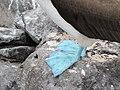 Blue Footed Boobies - Espanola - Hood - Galapagos Islands - Ecuador (4871496728).jpg