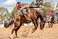 Boddington Rodeo 2015 (128247507).jpeg