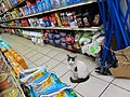 Bodega Cat Greenpoint.jpg