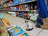 Bodega cat in the Greenpoint neighborhood of Brooklyn, New York