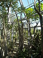 Bogarub-wüstenhaus-2.jpg