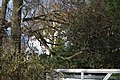 Bogota farmhouse through the trees.jpg