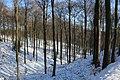 Bois du Pottelberg - Pottelbergbos 19.jpg