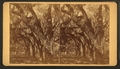 Bonaventure Cemetery, from Robert N. Dennis collection of stereoscopic views 5.png