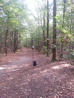 Bos bij Vliedberg Noord-Brabant