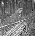 Bosbewerking, arbeiders, boomstammen, gereedschappen, Bestanddeelnr 251-9140.jpg