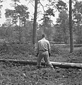 Bosbewerking, arbeiders, boomstammen, werkzaamheden, Bestanddeelnr 251-7855.jpg