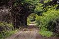 Bosque de Ritoque, Quintero.jpg