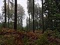 Bosque de Teutoburgo.jpg