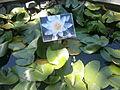 Botanička Bašta Jevremovac 003.JPG