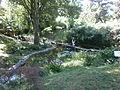 Botanička bašta Jevremovac 073.JPG