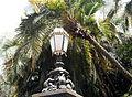 Botanic Garden Adelaide South Australia.JPG