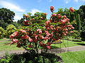 Botanical Garden of Peradeniya 42.JPG