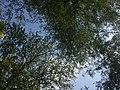 Botanical garden in Zagreb 2021 06 15 52 946000.jpeg