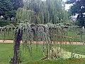 Boylevse Garden - panoramio (1).jpg