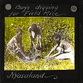 Boys Digging for Field Mice, Lubwa, Zambia, ca.1905-ca.1940 (imp-cswc-GB-237-CSWC47-LS6-016).jpg
