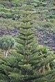 Breña Baja, Santa Cruz de Tenerife, Spain - panoramio (2).jpg