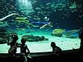 Breeding staff, Sunshine Aquarium.jpg