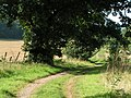 Bridleway along the west border of Killerton woods - geograph.org.uk - 966047.jpg