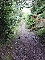 Bridleway in the Woods - geograph.org.uk - 946349.jpg