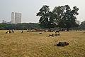 Brigade Parade Ground - Kolkata 2013-01-05 2415.JPG
