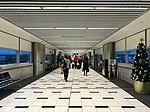 Brisbane Airport, Virgin Blue Domestic Terminal at Christmas 2016, 01.jpg