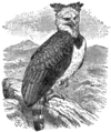 Britannica Harpy.png