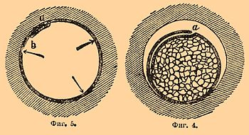Brockhaus and Efron Encyclopedic Dictionary b45 043-3.jpg