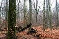 Buczyna Natural Reserve (4).JPG