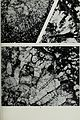 Bulletin of the British Museum (Natural History), Geology (1972) (20444598085).jpg