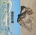 Bursa bufonia IMG 5411 Beijing Museum of Natural History - Natural History Museum of Guangxi.jpg