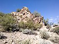 Butcher Jones Trail - Mt. Pinter Loop Trail, Saguaro Lake - panoramio (123).jpg