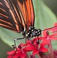Butterfly 16a (4867267026).jpg