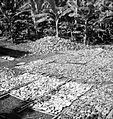 COLLECTIE TROPENMUSEUM Het drogen van kopra in Ragas TMnr 10012450.jpg