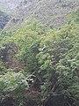 Cañón del Sumidero, Octubre 2020 - 13.jpg