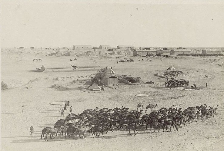 Camels at Maghdabah in 1915