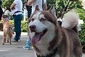 Caminata por los perros y animales Maracaibo 2012 (27).jpg