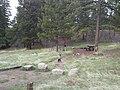 Campsite - panoramio (5).jpg