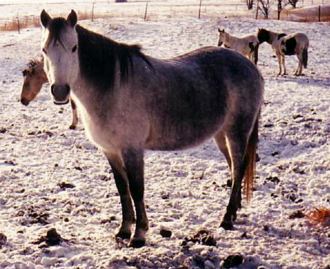 Canadian Rustic Pony - Canadian Rustic Pony